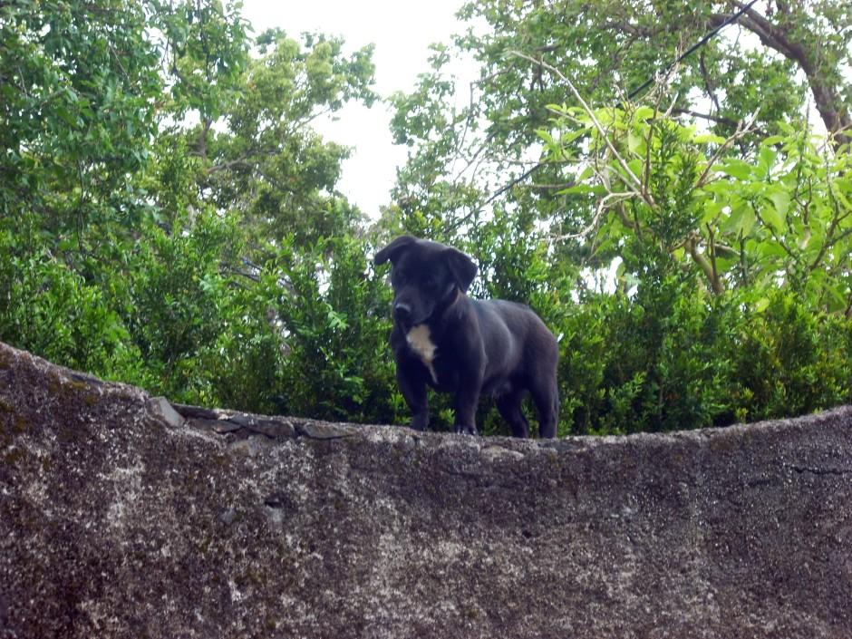 Madeira animals 9